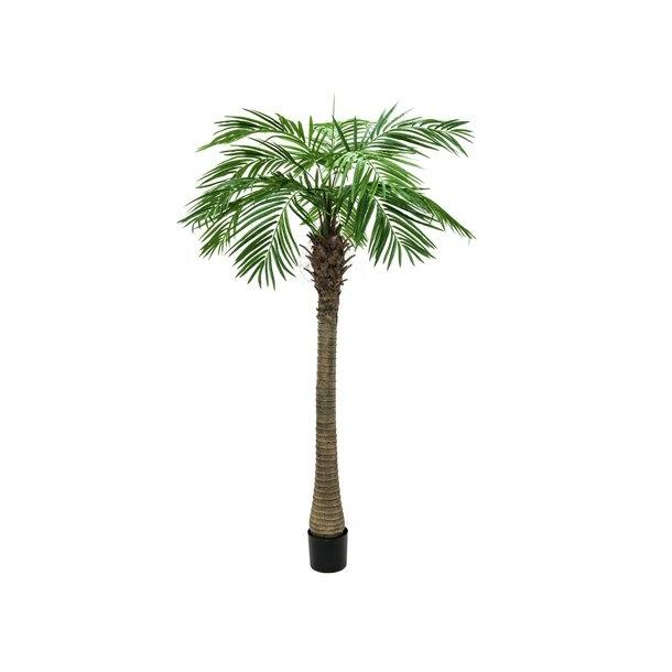 Palme cirka 200 centimeter høje.